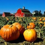 Where to Buy and How To Cook A Pumpkin