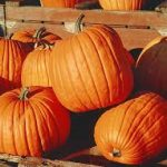 Awesome Halloween Recipes