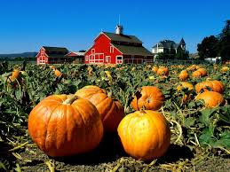 pumpkin farm